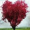 Поделись любовью