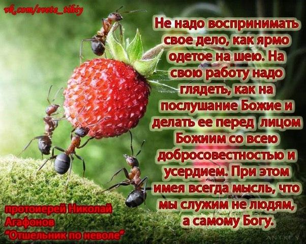 http://cs316730.userapi.com/v316730685/5820/rkVw_FobjZk.jpg