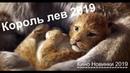 КОРОЛЬ ЛЕВ 2019 Русский тизер-трейлер