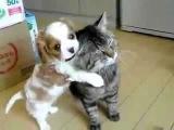 смотреть смешные ролики про кошек