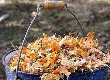 Как использовать опавшие листья разумно: 4 практичных способа