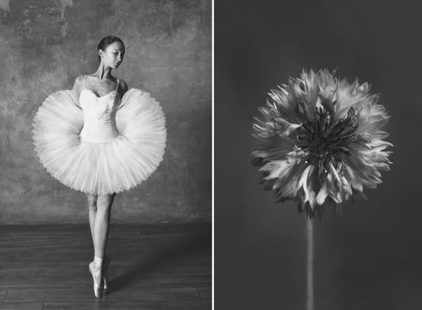 """Чёрно-белый проект фотографа Юлии Артемьевой """"Балерина и цветы"""" попал на страницы зарубежных изданий"""