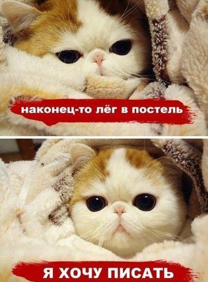 не хочу не могу: