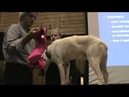 Sled dog examination shoulder injure by Tim Hunt