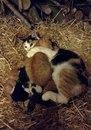 Кошка родила шестерых котят прошлой ночью.