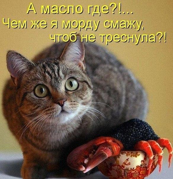 http://cs618222.vk.me/v618222103/12e77/efoMypWAaWk.jpg