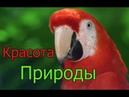 Захватывает дух Яркие цвета природы успокаивающая музыка Beautiful Nature