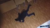 Андрюша немножко упал)# ДЕБИЛ 80 ЛвЛ