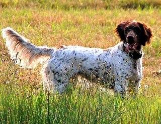 Собака Крысолов 6 Букв - фото 6