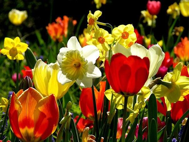 Spring Sunny Flowers