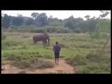 Elephant Attack kill a man at Yala Sri Lanka