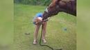 Самые смешные ПРИКОЛЫ С ЛОШАДЬМИ, Смешные лошади Funny horse 9