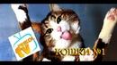 Подборка приколов про кошек №1