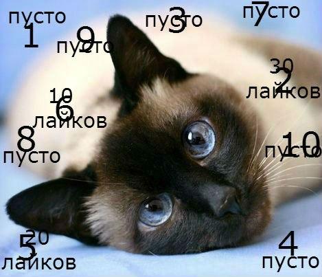 котэ на аву: