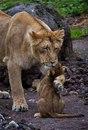 Самые добрые фотографии объятий животных