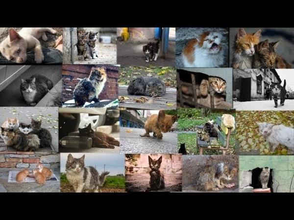 Бедные бездомные кошки Бездомным кошкам и котам посвящается Homeless cats