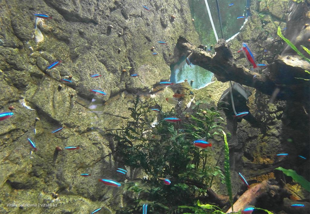 Маленькие рыбки в аквариуме, зоопарк Алматы 2018