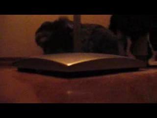 Дружба кота и кролика :))