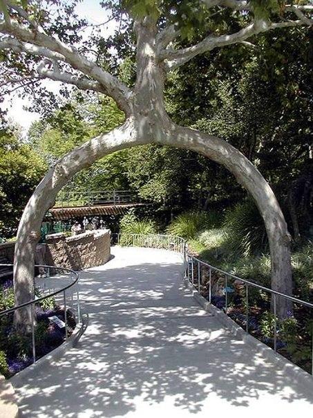 Самые оригинальные деревья в мире