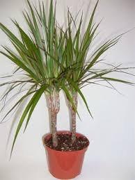 чернаямагия - Магия растений. Магические свойства растений. Обряды и ритуалы. Амулеты и талисманы из растений.  YT4KUIhyFdE