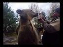 Медведь любит малиновое варенье || ViralHog
