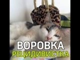 Кошка рецидивистка