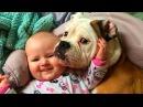 Малыши под защитой верных собак