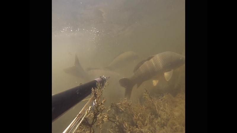 Небольшой фильм о поездке на подводную охоту в Астрахань.