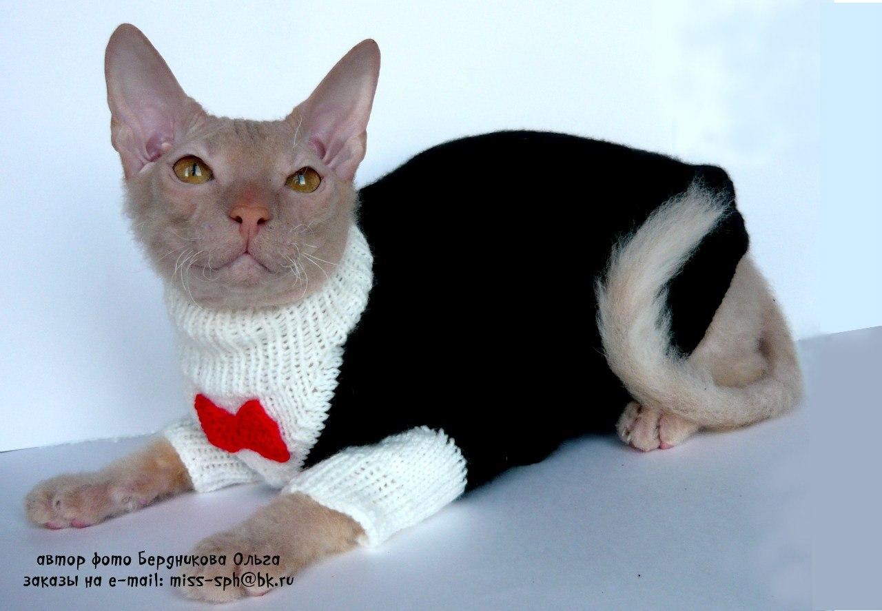 СФИНКСЫ- ВОЛШЕБНЫЕ КОШКИ. Всё о кошках сфиксах.