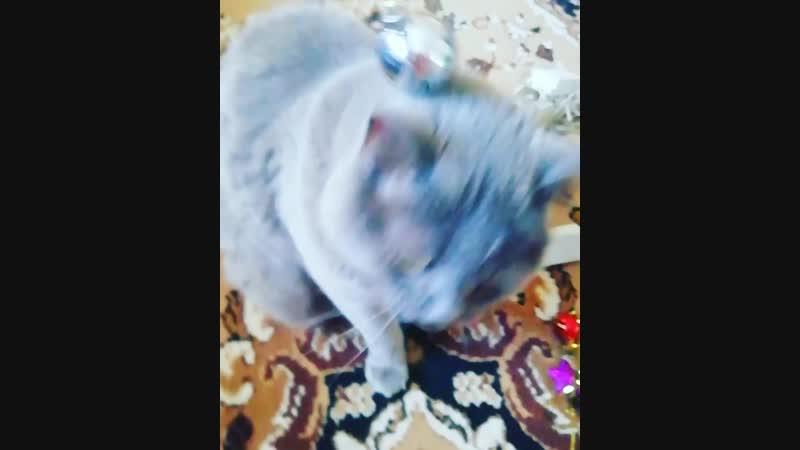 Кот помощник🐈