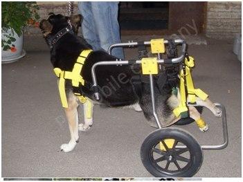 Коляска для инвалида собаки