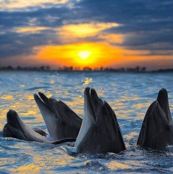 Дельфины в лучах заката.