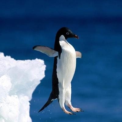 Happy Penguin, 6 июля 1963, Самара, id229276760