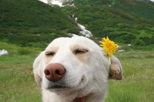 Собака-романтяка