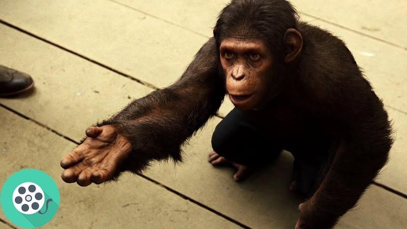 Цезарь спрашивает разрешения погулять в парке. Восстание планеты обезьян (2011) год.