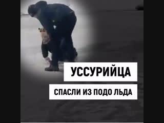 Мальчика вытащили из подо льда