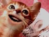 Поющие кошки,РЕМИКС - O-Zone - Dragostea Din Tei