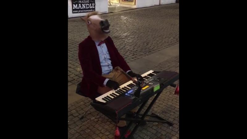 Гениальная лошадь-пианист