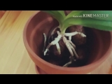 Орхидея ванда. Посадка в пробки