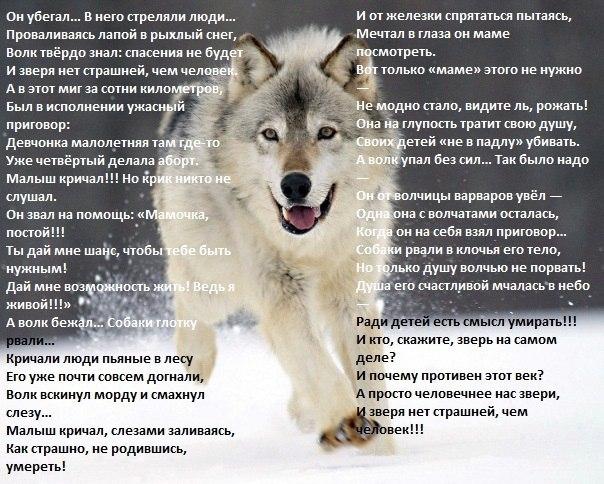 Стих о животных трогательные