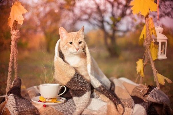 коты осенью фото
