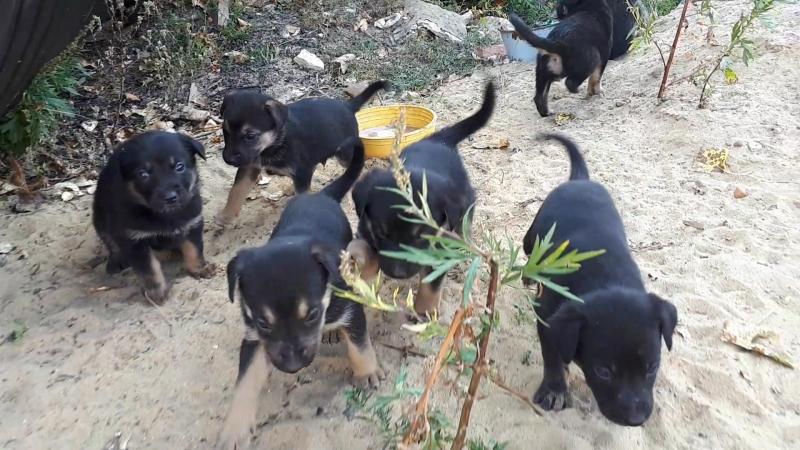 Милые щенки ищут дом