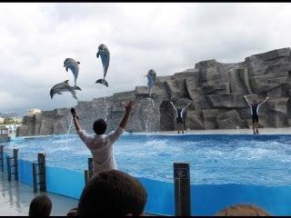 ბათუმის დელფინარიუმი (Batumi Dolphinarium)