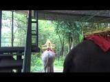 Таиланд г. Сирача ( тигриный зоопарк) Катание на слонике)))