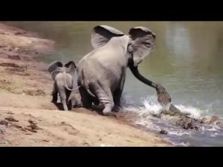 Удивительные случаи взаимовыручки у животных.