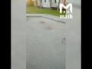 В Калининграде рабочие обновляли дорожное покрытие и заменили плитку на канализационные люки. Потому что стройматериалов не хват