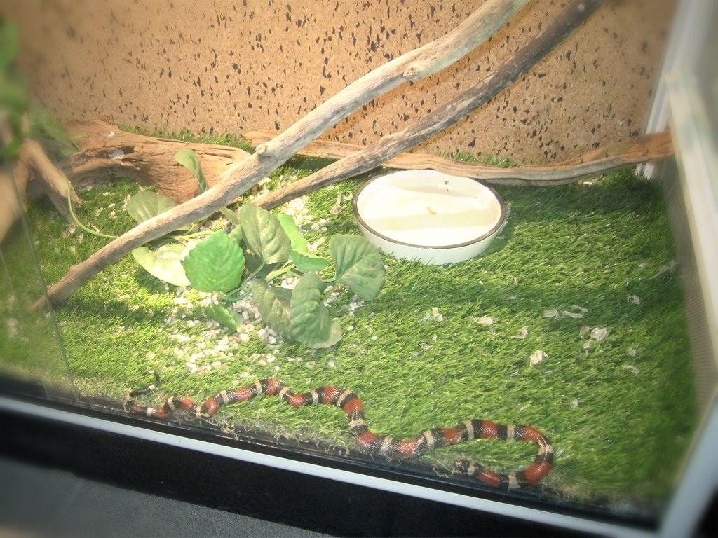 Террариум для молочной змеи