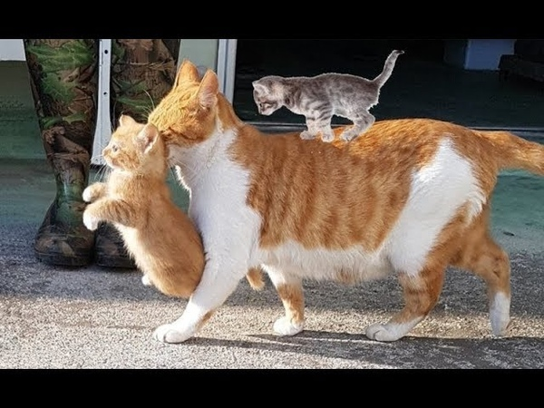 Mother cats protecting their cute kittens | Mom Cat Loves Kittens compilation 2018