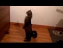 Смешные кошки приколы про кошек и котов 2017 47 Funny Cats Самое смешное TOP