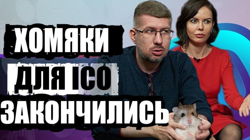 Хомяки для ICO кончились. Где найти деньги? btc bitcoin криптовалюта биткоин прогноз заработок